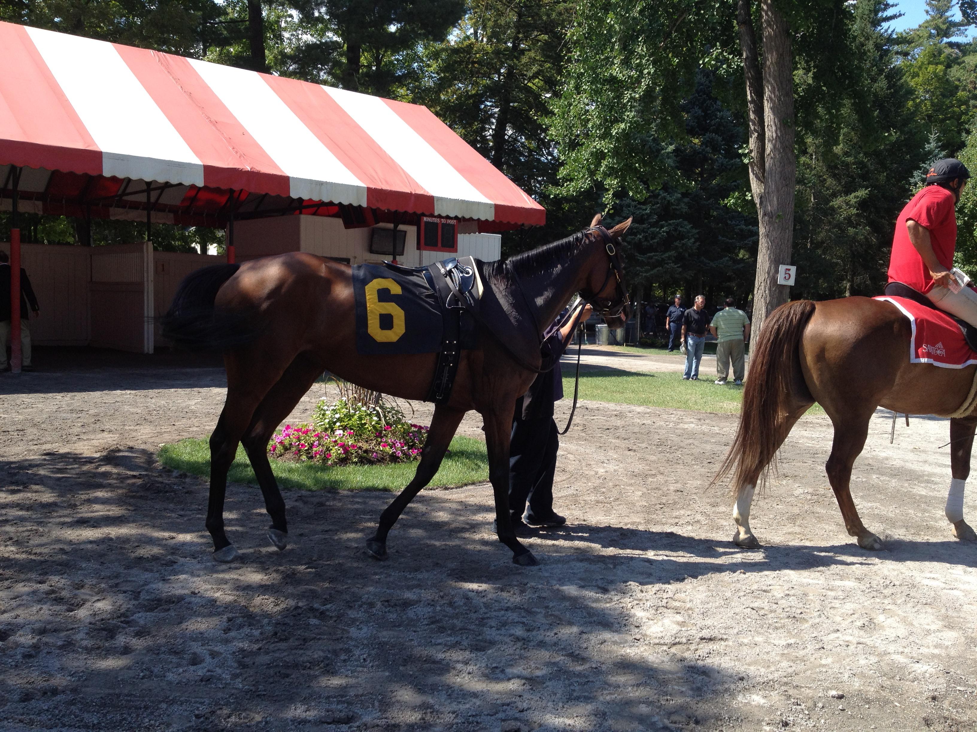 Inside the Paddock at Saratoga Racetrack