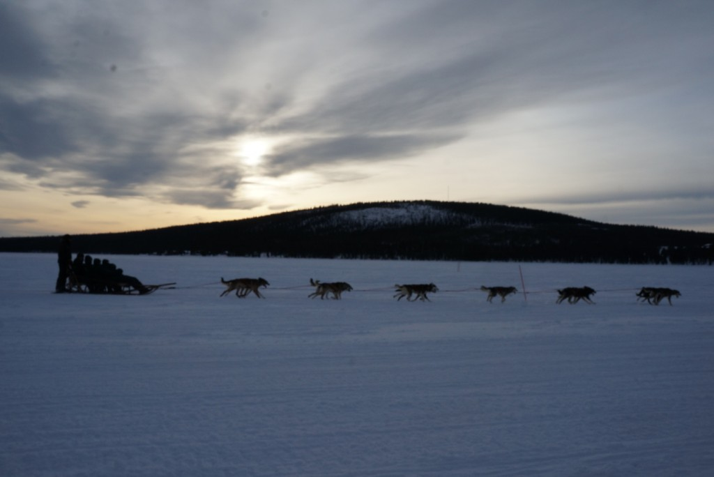 Dog Sledding in the Swedish Laplands